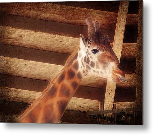 Giraffe Metal Print featuring the photograph Giraffe Smarty by Melanie Lankford Photography