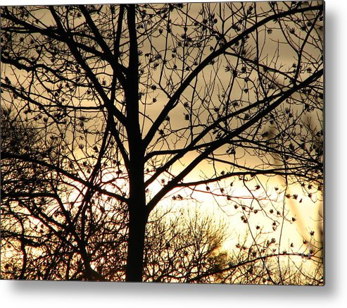 Trees Metal Print featuring the photograph Gold Sunset by Roxy Riou