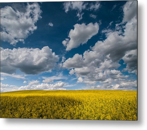 Landscapes Metal Print featuring the photograph Happiness by Davorin Mance