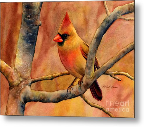 Cardinal Metal Print featuring the painting Northern Cardinal II by Hailey E Herrera