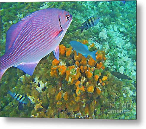 Fish Metal Print featuring the painting Reef Life by John Malone