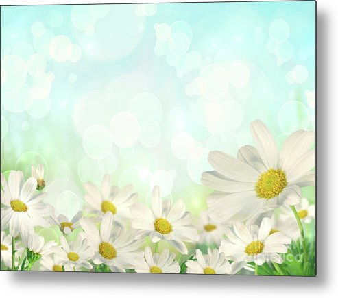 Abstract Metal Print featuring the photograph Spring Background With Daisies by Sandra Cunningham