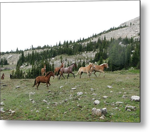 Equus Caballus Metal Print featuring the photograph Stock Wrangling In by Pam Little