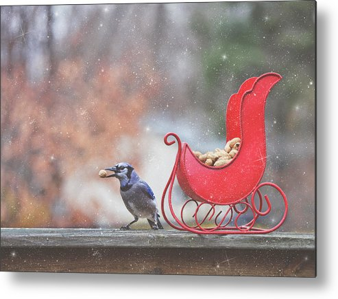 Blue Jays Metal Print featuring the photograph Winter Blue Jay #2 by Pat Abbott