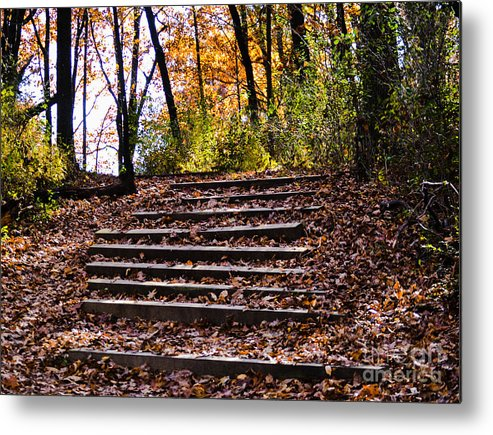 Landscape Metal Print featuring the photograph Wooded Stairs by Catherine Hill