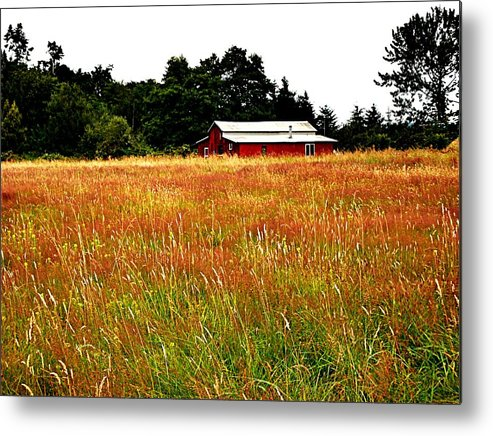Barn Metal Print featuring the photograph Amber Waves by Kevin D Davis