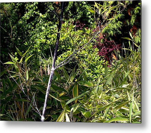 Bamboo Metal Print featuring the photograph Bamboo And Tree Leaves by Sandra Maddox