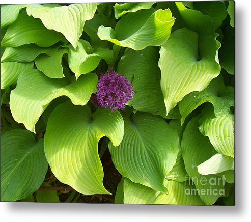 Flower Metal Print featuring the photograph Centre Of Attention by Holly Lyndon