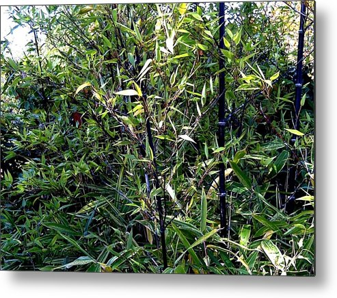 Bamboo Metal Print featuring the photograph Contrast Of Bamboo Leaves by Sandra Maddox