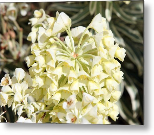 Nature Metal Print featuring the photograph Flowers - 0053 by S and S Photo