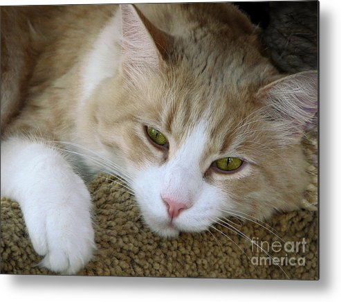 Cats Metal Print featuring the photograph I Miss You by Ellen Cotton