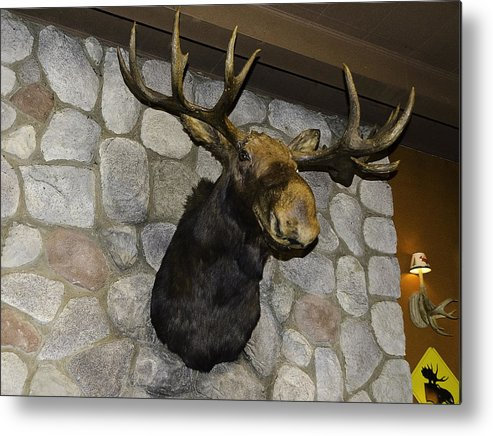Usa Metal Print featuring the photograph Mounted Moose by LeeAnn McLaneGoetz McLaneGoetzStudioLLCcom