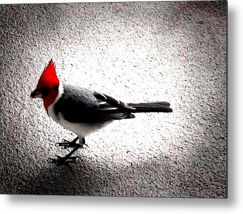 Metal Print featuring the photograph Red Head by Ken Riddle