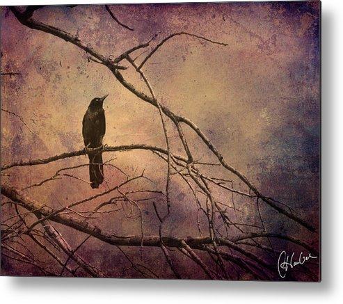 Bird Metal Print featuring the photograph Blackbird 2 by Christine Hauber