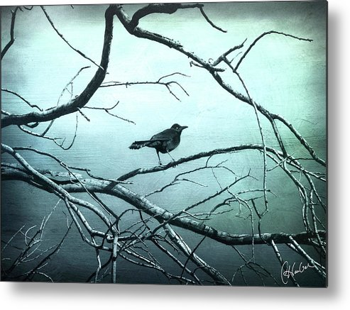 Bird Metal Print featuring the photograph Blackbird 4 by Christine Hauber