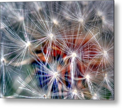 Dandelion Metal Print featuring the photograph Faith by Mitch Cat