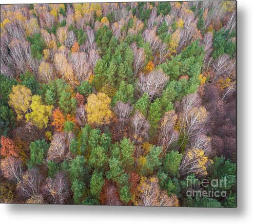 Aerial Metal Print featuring the photograph Aerial View Of The Forrest With Different Color Trees. by Mariusz Prusaczyk