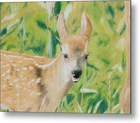 Fawn Metal Print featuring the painting Alert Fawn by Miriam A Kilmer