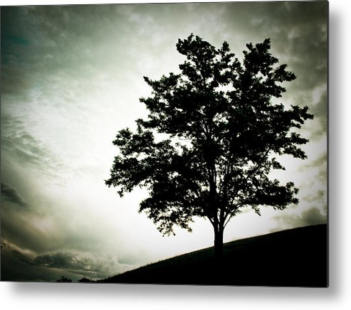 Tree Metal Print featuring the photograph Arbol by Felix M Cobos