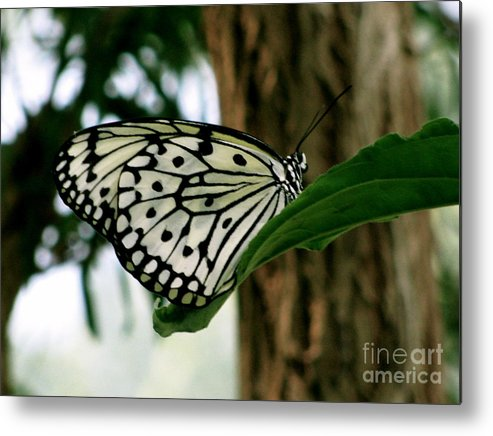 Butterfly Metal Print featuring the photograph Black And White Butterfly by Sherri Williams