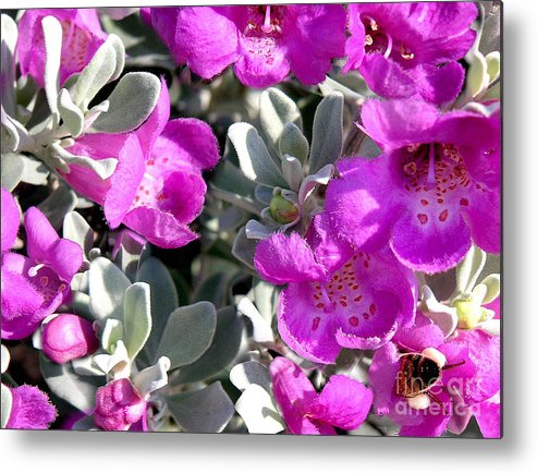 Nature Metal Print featuring the photograph Bottoms Up by Lucyna A M Green