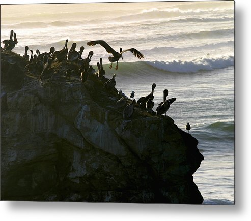 Landscape Metal Print featuring the photograph Coming For Landing by Chuck Kuhn