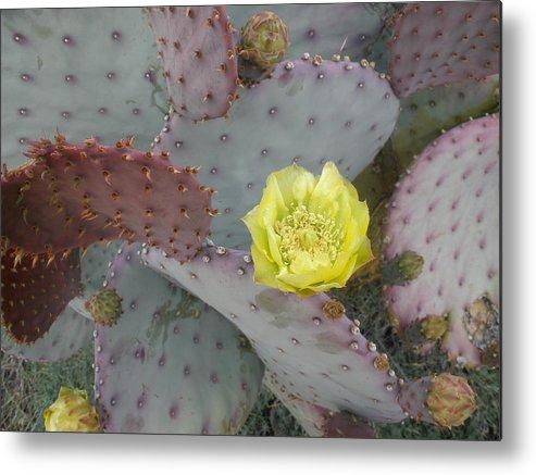 Cactus Metal Print featuring the photograph Desert Bloom by Robert Cunningham