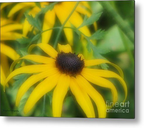 Flower Metal Print featuring the photograph Dreaming Of The Black-eyed Beauty by Roxy Riou