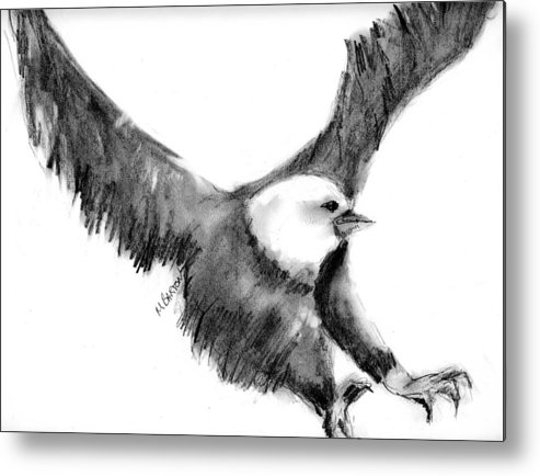 Eagle Metal Print featuring the drawing Eagle In Flight by Marilyn Barton
