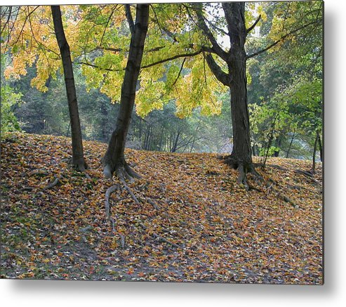 Autumn Metal Print featuring the photograph Fall In Stony Brook by Raju Alagawadi