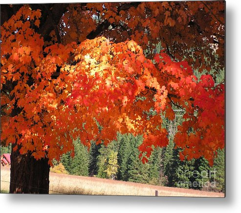 Autumn Photographs Metal Print featuring the photograph Flickering Sunlight by Louise Magno