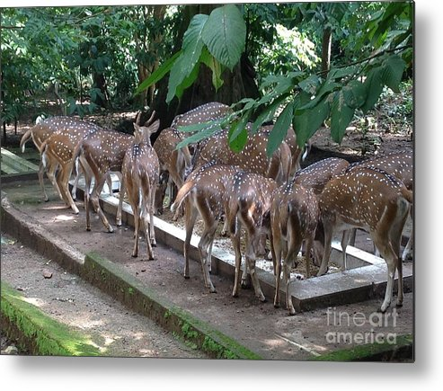 Metal Print featuring the photograph Forest Inspection Bungalow by Aysha neha Naushad