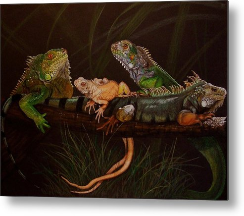 Iguana Metal Print featuring the drawing Full House by Barbara Keith