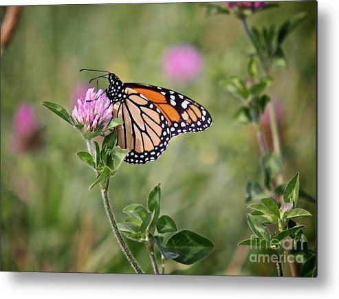 Insect Metal Print featuring the photograph Gold Wings by Robert Pearson