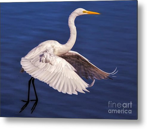 Great White Egret Metal Print featuring the photograph Graceful by Paulette Thomas