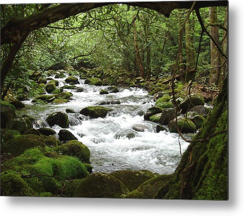 Smoky Mountains Metal Print featuring the photograph Greenbrier River Scene 2 by Nancy Mueller