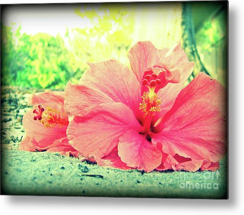 Hibiscus Metal Print featuring the photograph Hibiscus Love by Jessica Palotas