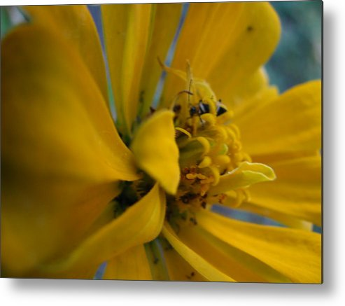 Flowers Metal Print featuring the photograph Hiding Place by Gloria Byler