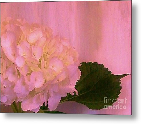 Photo Metal Print featuring the photograph Hydrangea In Pink by Marsha Heiken