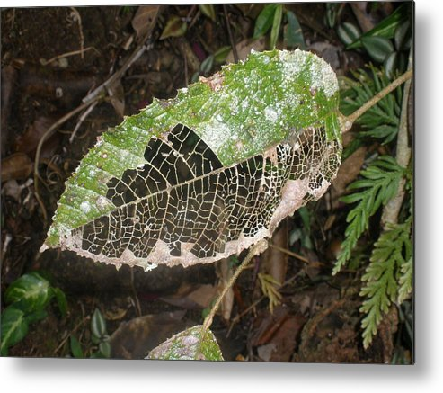 Leaf Metal Print featuring the photograph Leaf by Robert Cunningham