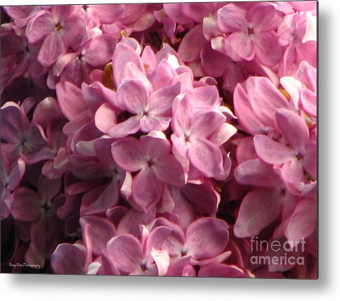 Lilac Metal Print featuring the photograph Lilac Beauty by Roxy Riou