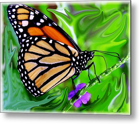 Monarch Butterfly Metal Print featuring the photograph Monarch Swirl 1 by Jim Darnall