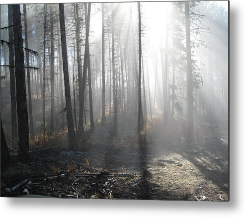 Metal Print featuring the photograph Morning Fog by JK Photography