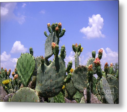 Nature Metal Print featuring the photograph Nature In The Wild - Against A Big Sky by Lucyna A M Green