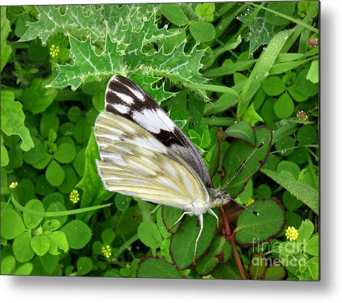 Nature Metal Print featuring the photograph Nature In The Wild - Visiting With The Greens by Lucyna A M Green