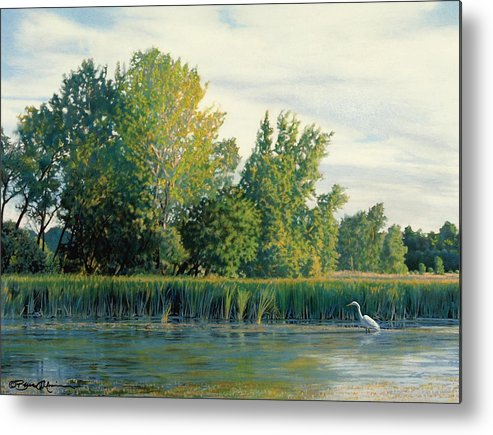 Great Egret Metal Print featuring the drawing North Of The Grade-great Egret by Bruce Morrison