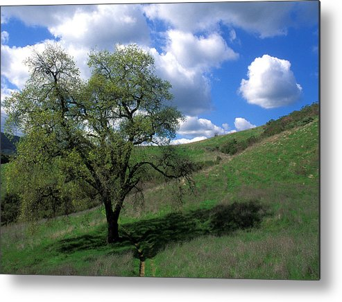 Oak Trees Metal Print featuring the photograph Oak Tree With Clouds by Kathy Yates