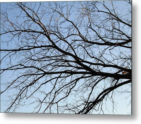 Old Tree Metal Print featuring the photograph Old Tree by Anthony Schafer