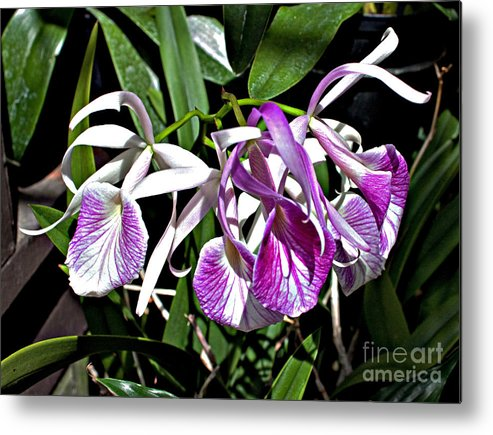 Floral Metal Print featuring the photograph Orchid Cluster by Robert Sander