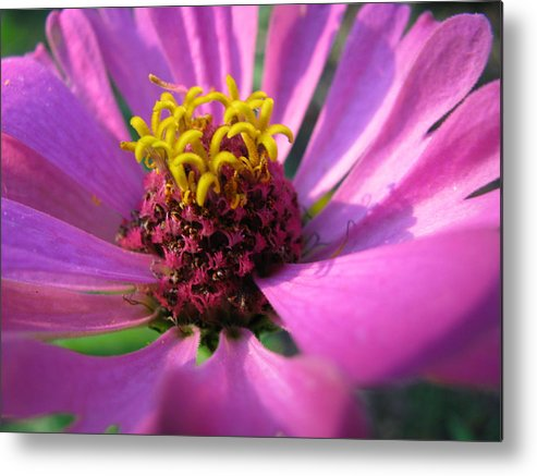 Flowers Metal Print featuring the photograph Pink Breeze by Gloria Byler